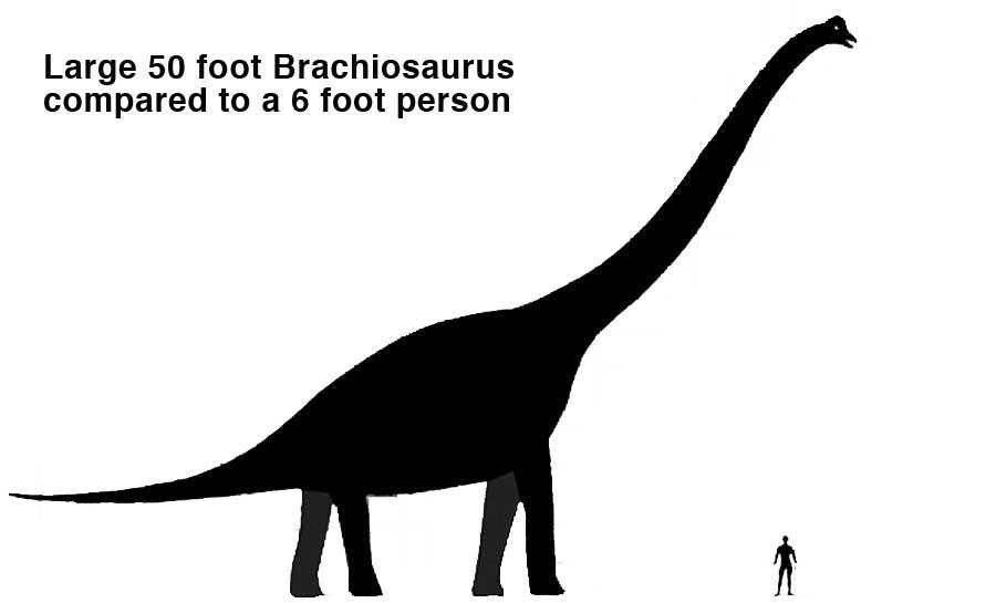 Wowtoyz Educational Pages Brachiosaurus